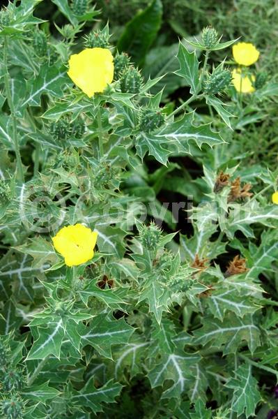 Yellow blooms; Deciduous; Broadleaf; North American Native