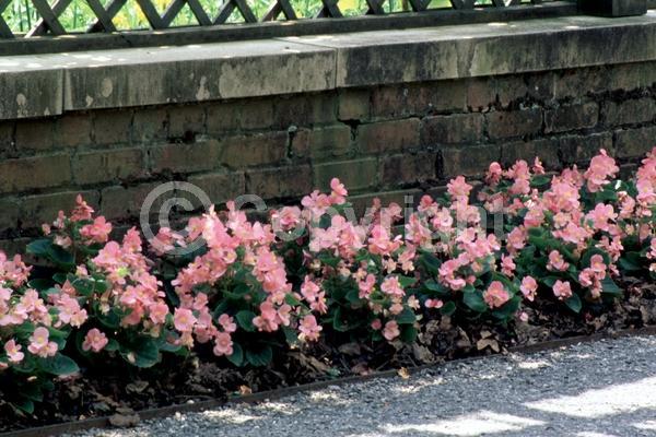Pink blooms; Evergreen; Broadleaf