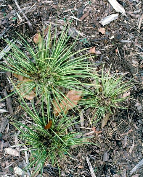 Green blooms; Deciduous; Broadleaf