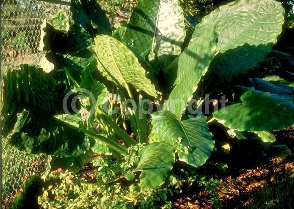 Green blooms; Evergreen; Broadleaf