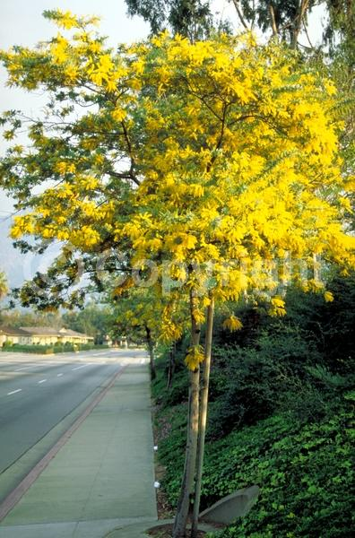 Yellow blooms; Evergreen; Broadleaf; North American Native