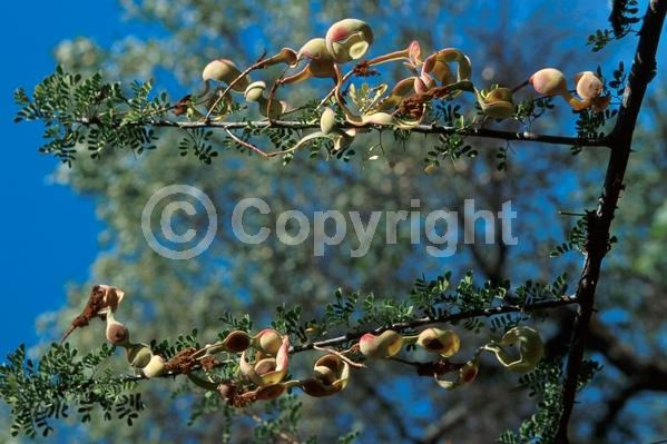 Yellow blooms; Evergreen; Semi-evergreen; Broadleaf; North American Native