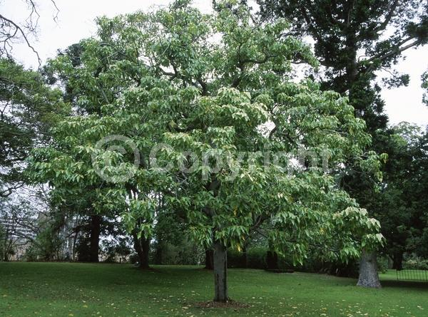 White blooms; Semi-evergreen; North American Native